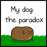 a kutya paradox viselkedései
