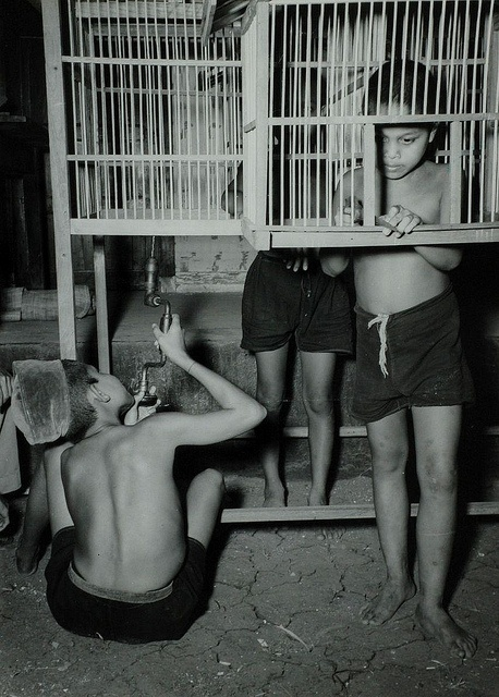 Indonesia - Boys making birdcages (1947) by Nationaal Archief, via Flickr