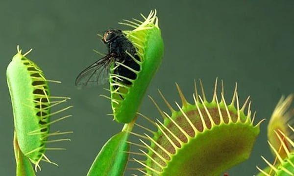 19 Plantes Anti Insectes Qui Protegent Naturellement Votre Maison