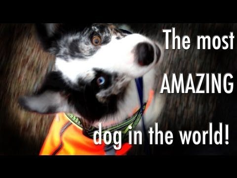 ▶ The most amazing dog tricks performed by Splash the border collie - YouTube