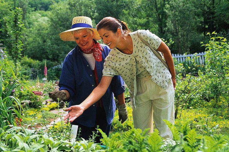 Популярные советы огородникам проверяем на полезность и здравый смысл
