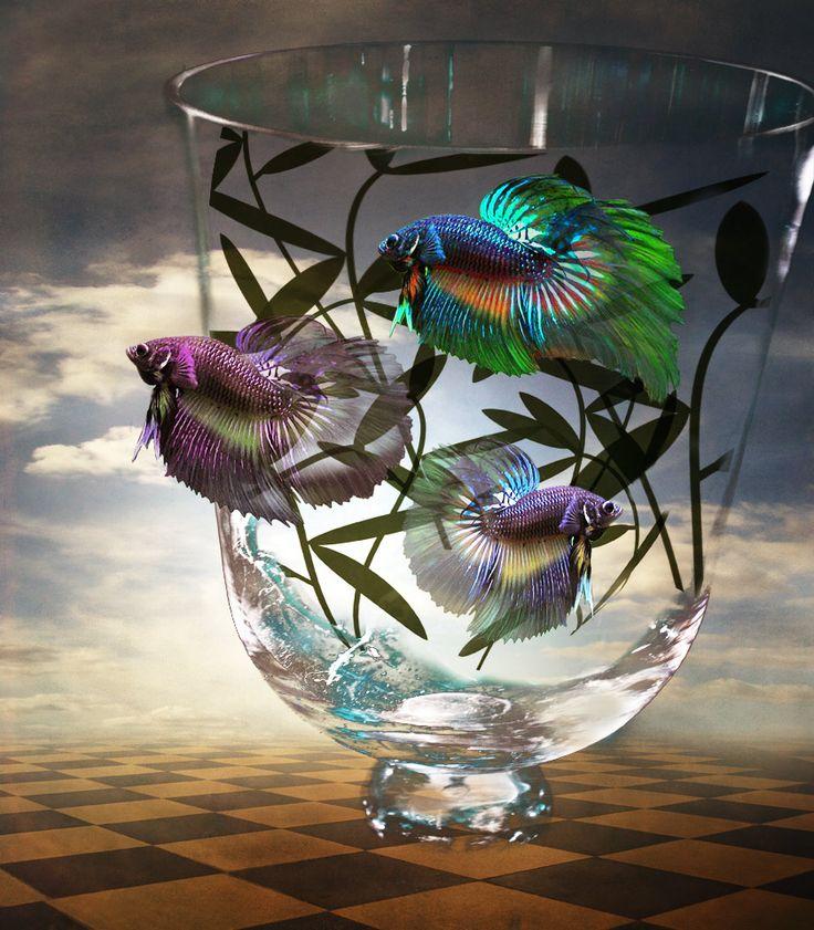 jean pierre delmur   Des poissons, de la transparence.....