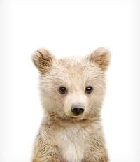 Woodland Animal Prints – Set of 6 baby animals – Printable Art