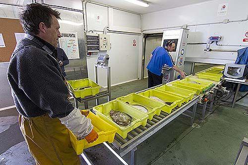 Cofradía de Pescadores Sta. María de Sábada, subasta virtual de pescado
