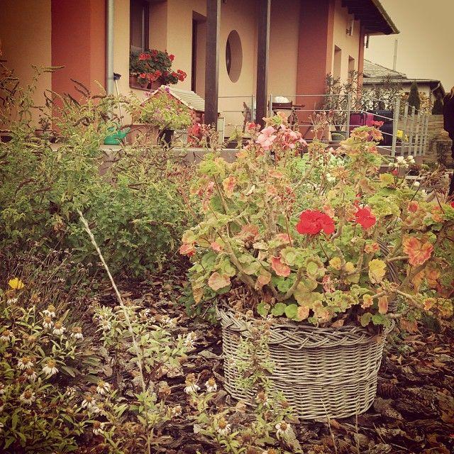 #sárvár #wellness Sárvár Nyírfa  Apartman virágoskert