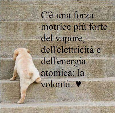 #volontà #dating #edarlingitalia