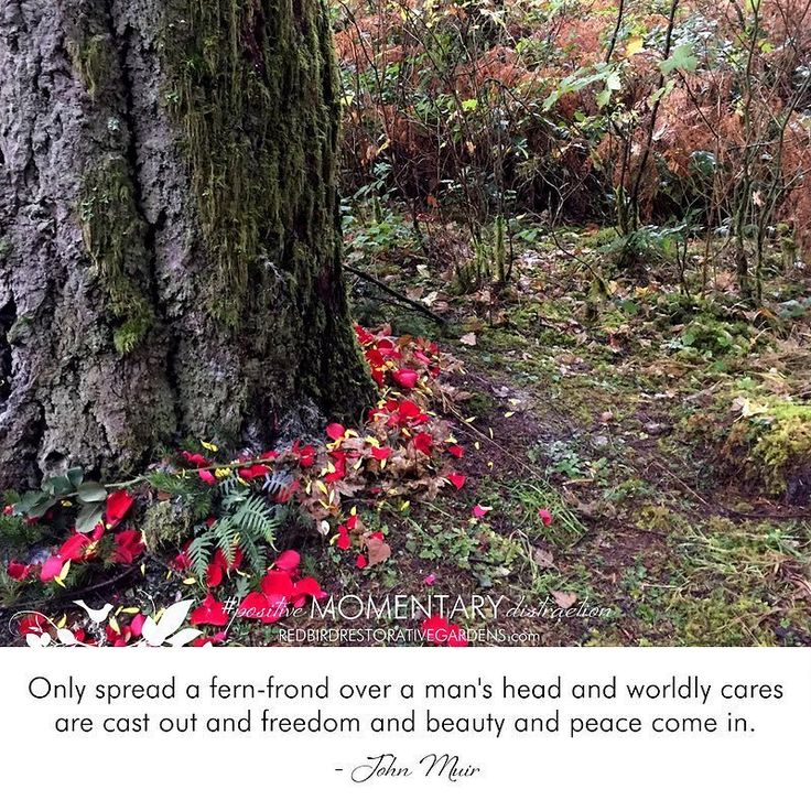 """""""Only spread a fern-frond over a man's head and worldly cares are cast out and freedom and beauty and peace come in."""" - John Muir  #positivemomentarydistraction #thriveoutsidehealinside #restorative #garden #comfortzone #sanctuary #garden #quote #mondaymotivation #healinggardenhappyplace #whyyouneedagardencomfortzone #naturenurtures #freedom #liberty #independence #microrestorativemoment #letfreedomgrow"""