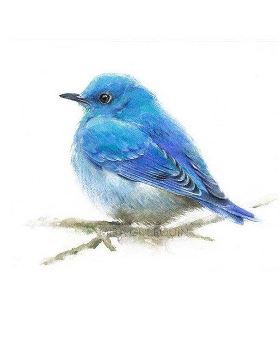 Bluebird Set Of 2 Mountain Bluebirds Watercolor Painting