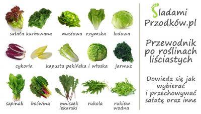 Przewodnik po salatach