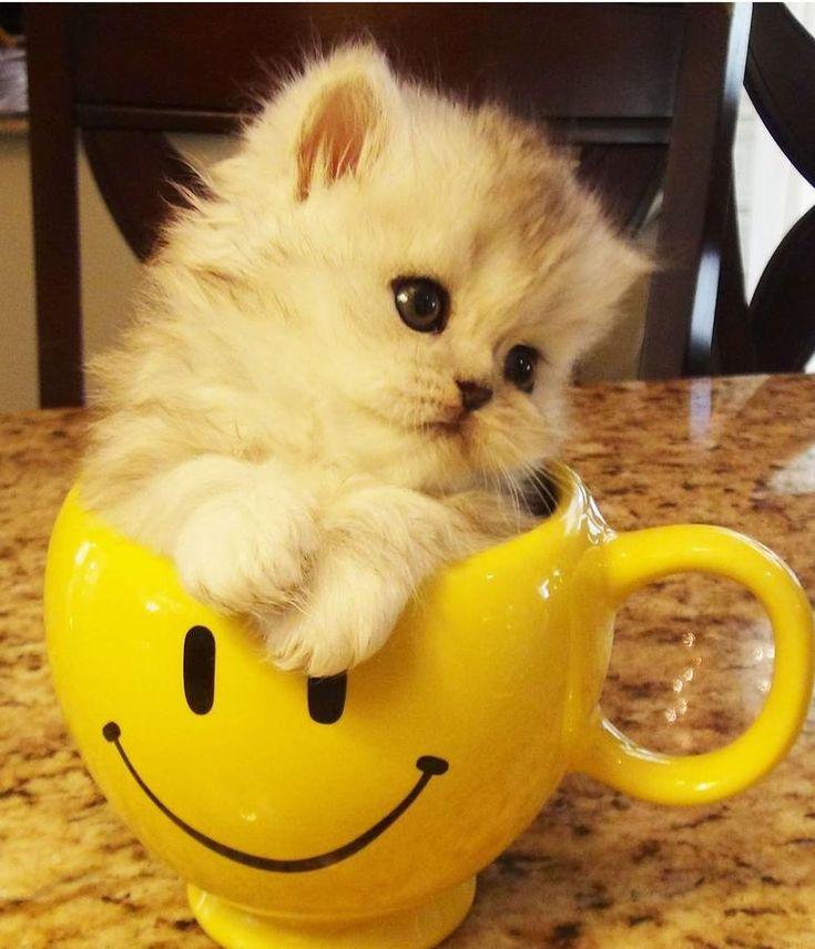 Няшные картинки с котиками доброе утро