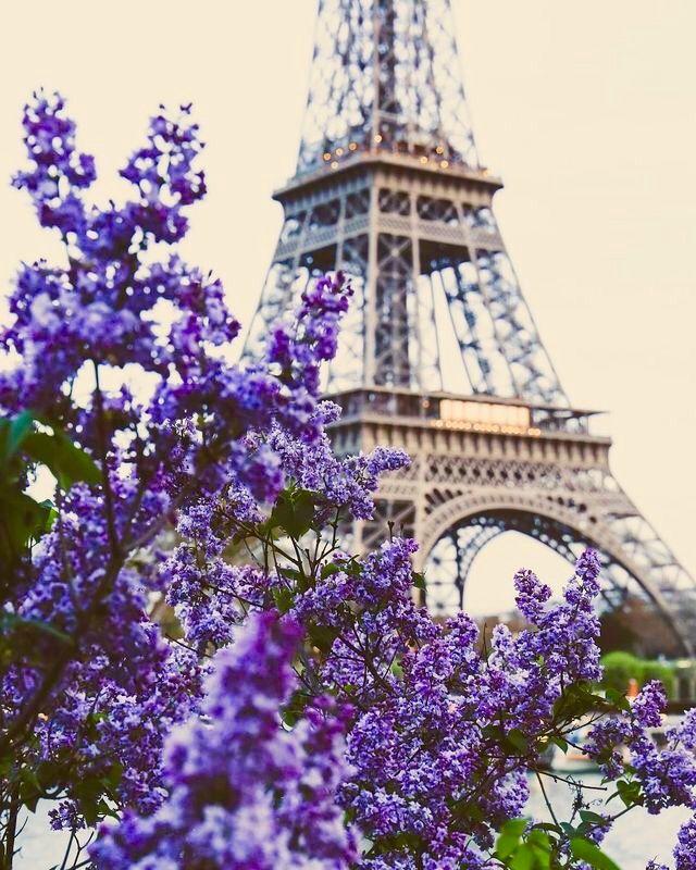 ● Paris and the purple flowers