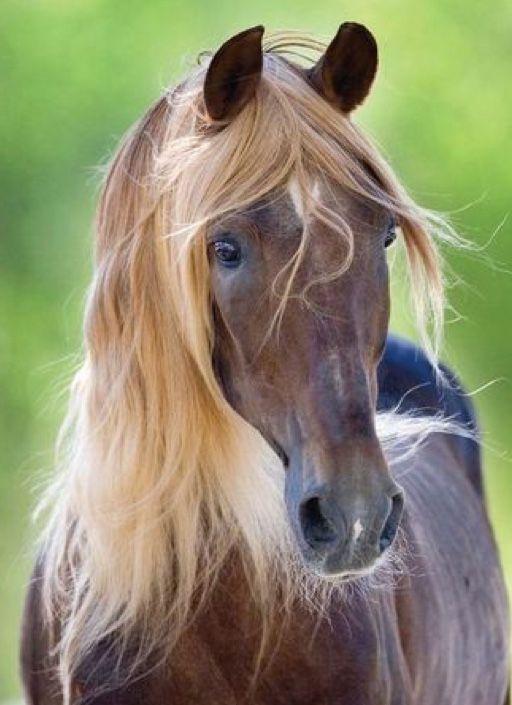Was für eine Schönheit! #Pferdeliebhaber