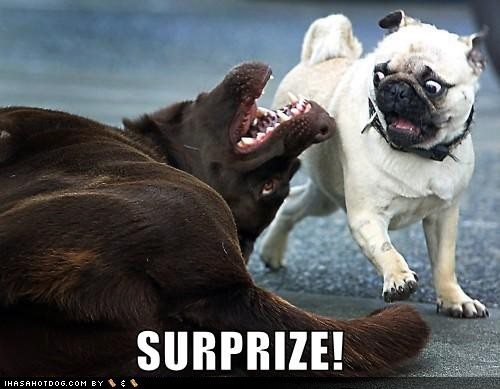 Funny dogs and puppies: Funny dogs