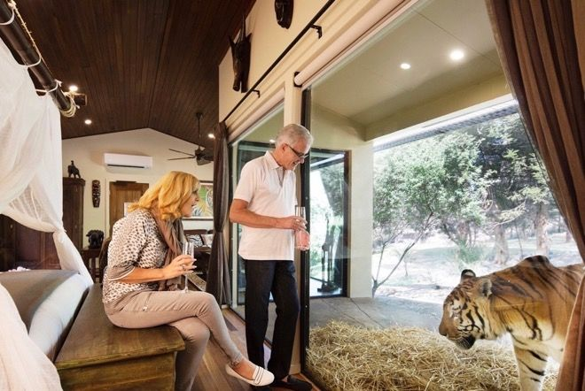 Sleepovers are a bit different at Jamala Wildlife Lodge  in #Canberra, Australia. Read all about it on our website http://www.suitcasesandstrollers.com/articles/view/family-friendly-accommodation-jamala-wildlife-lodge-canberra?l=all #GoogleUs #suitcasesandstrollers #travel #travelwithkids #familytravel #familytraveltips #traveltips #bedtime #sleepover #tiger #bigcats