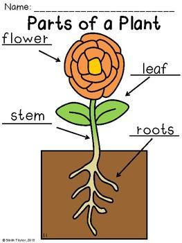 Parts of a Plant Labeling   Plant labels, Parts of a plant ...