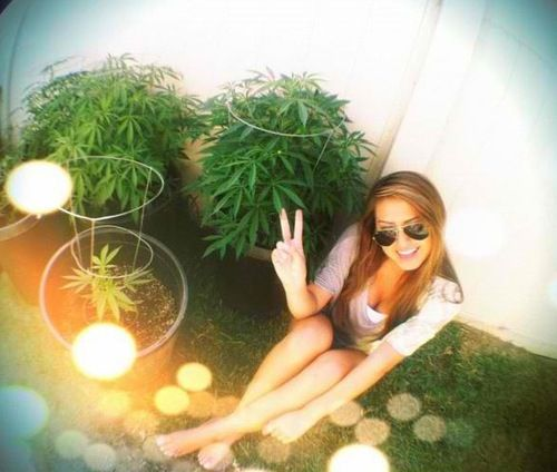 how to grow early girl weed