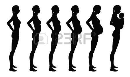 maternite: Les étapes de la grossesse de la femme. Une croissance le profil complet il est isolé sur un fond blanc