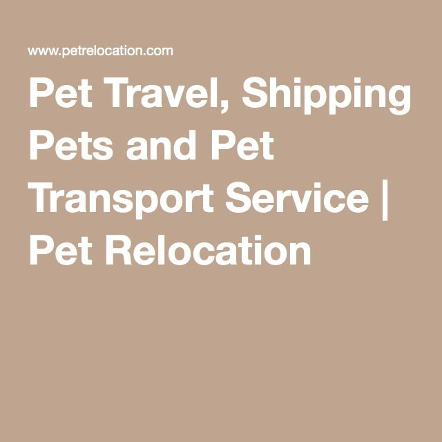 Pet Travel, Shipping Pets and Pet Transport Service | Pet Relocation