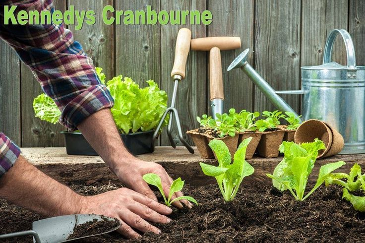 Super lend top soil, sugarcane mulch and potting mix are great to use in a vegetable garden