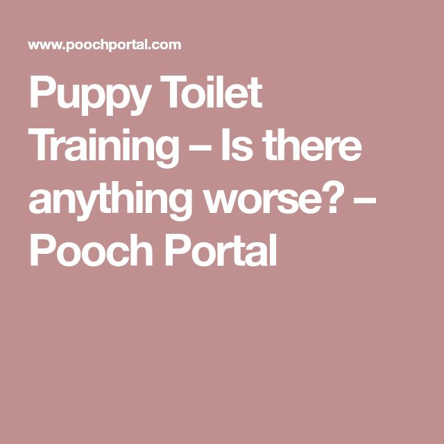 Puppy Toilet Training – Is there anything worse? – Pooch Portal