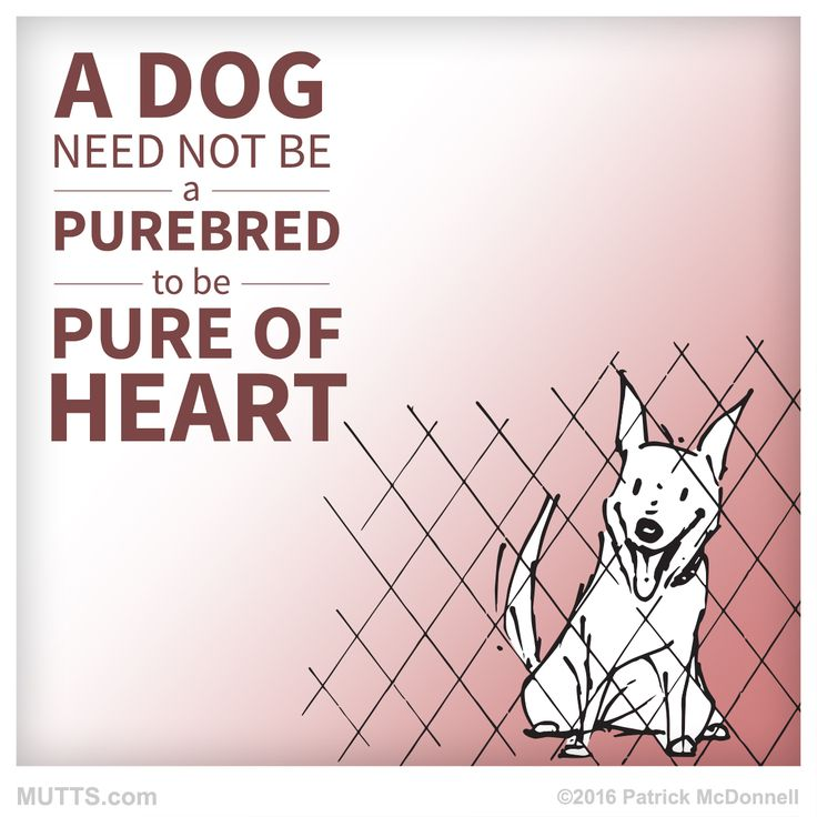 We totally agree! Do you know a dog that's pure of heart? #MUTTSofinstagram #dogsofig #dogstagram #shelteranimal #rescuedog #petsofig #quote