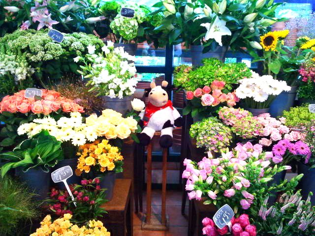 Can you find our #Cowbassador in all these colourful flowers?