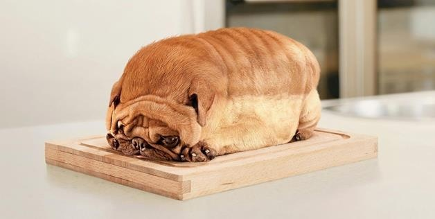 Pure bread dog  - other visual puns