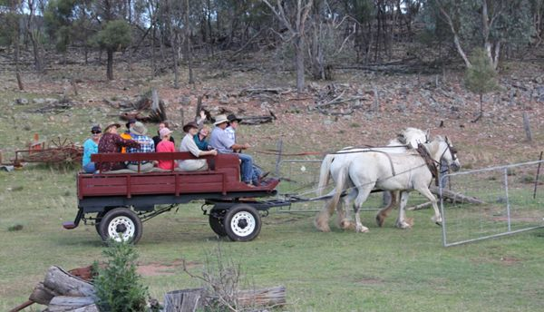 Get off the beaten track on a Tour from Sydney. Horse drawn cart ride on the Farmstay at Inglevale Eugowra
