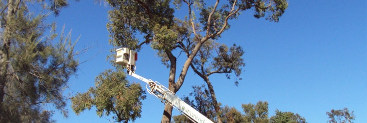 Looking for a tree pruning service company in Australia? #tree_pruning_perth #mulch_supplies_perth #wood_recycling_perth #tree_lopper_perth #tree_lopping_perth #tree_removal_perth #tree_mulching