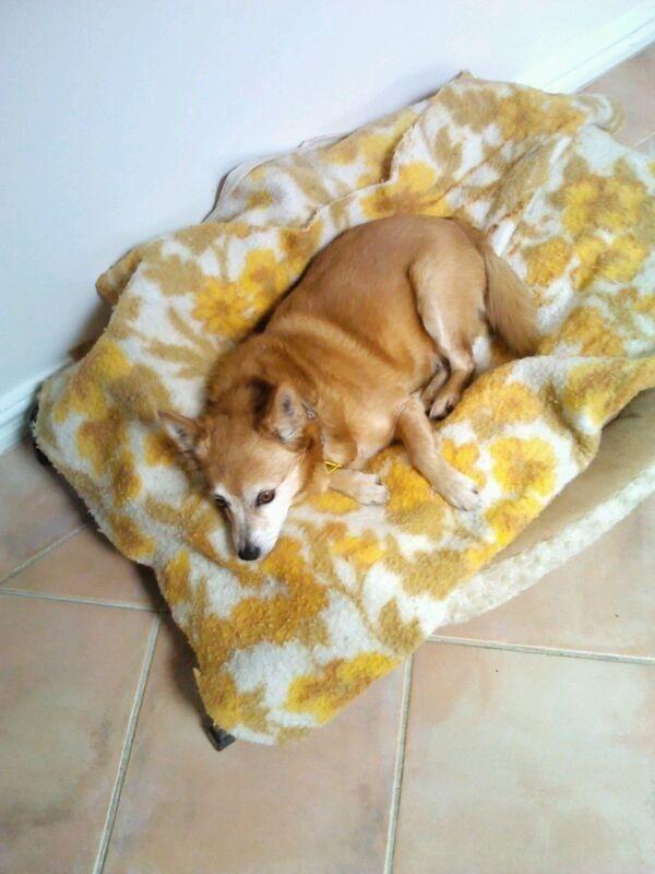 Precious Layla, RIP you were a very special dog.