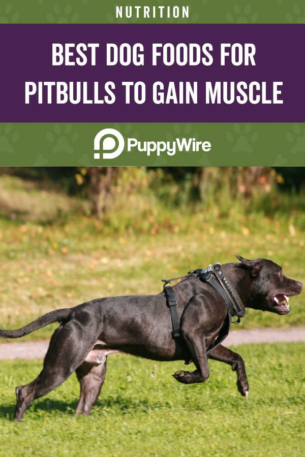 Best Dog Food For Pitbulls To Gain Weight And Build Muscle Best Dog Food Dog Food Recipes Best Dry Dog Food