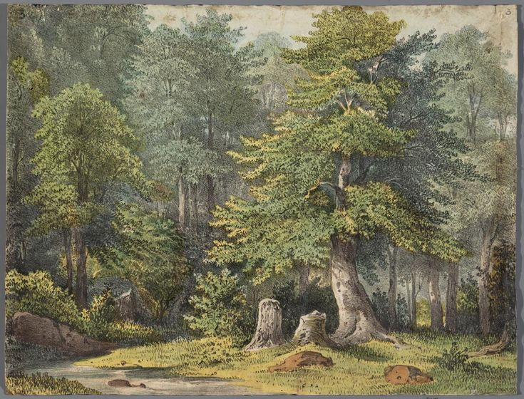Decor voor een papieren theater voorstellende een boshttp://www.geheugenvannederland.nl