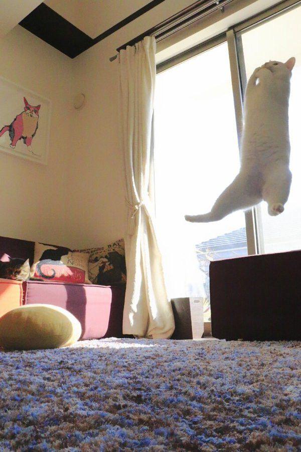 ジャンプしてる?いや、浮いている…!? 猫のミルコくんの無重力っぷりが気持ちよさそう!!
