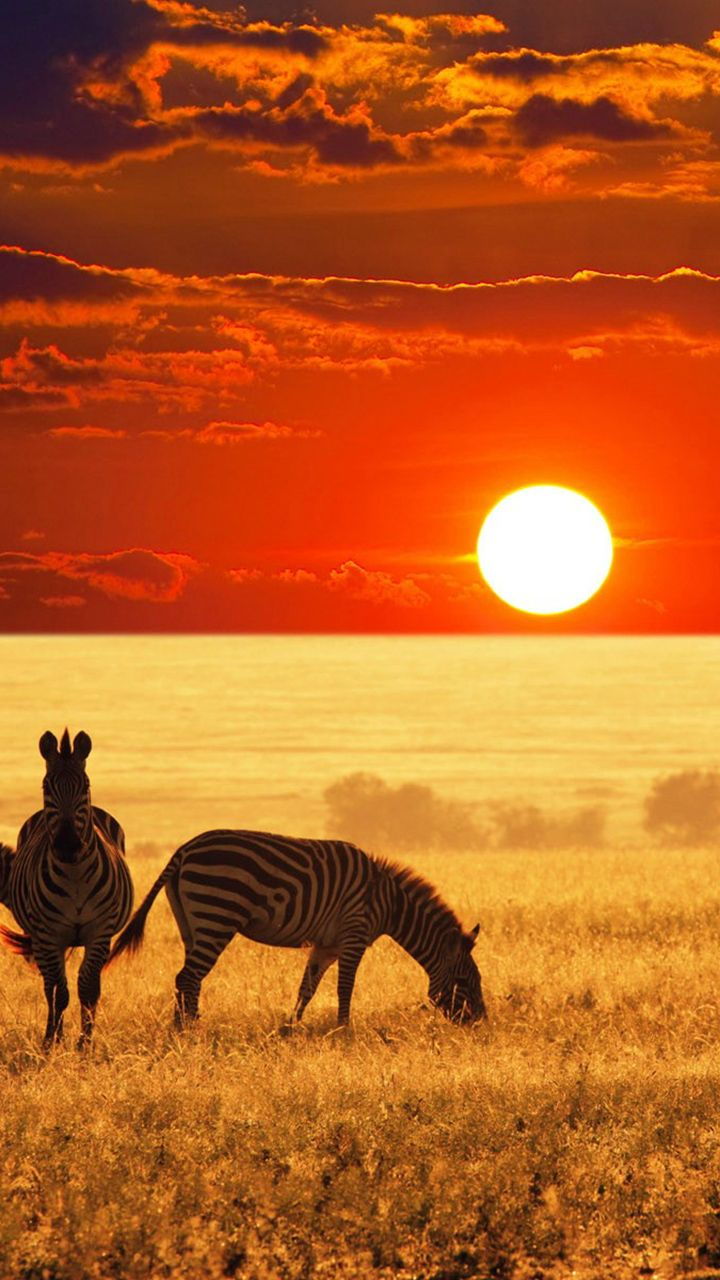 African Sunset by Michael Sheridan