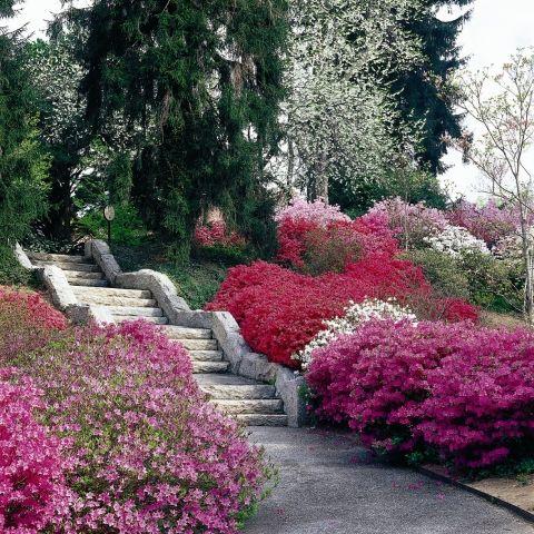Biltmore Estate | Contrived Nature - Landscape ...