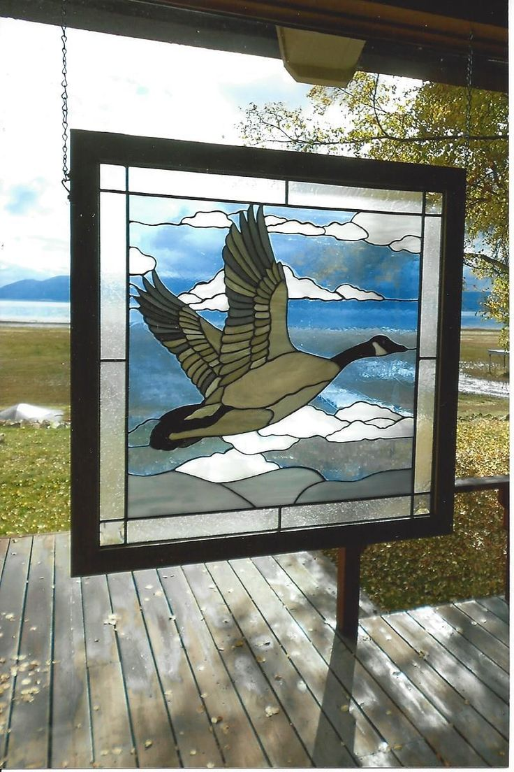 Canada Goose In The Air - Delphi Artist Gallery
