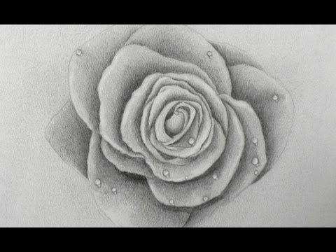 How to Draw a Rose  this guy has tons of awesome tutorials on art