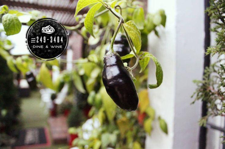 Nuestro jardin este lunes #Gardening #DDW!!! Los esperamos... http://daniel.com.co/fotos/