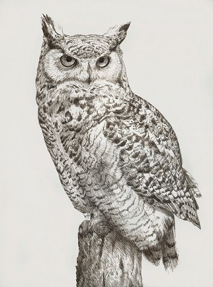 Ink drawing of a great horned owl - Artist: Katrina Ann