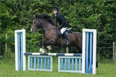 Denzel - Beautiful 14hh Welsh Cob For Sale http://www.equineclassifieds.co.uk/Horse/beautiful-14hh-welsh-cob-for-sale-listing-267.aspx#.UlwelVMyCSo