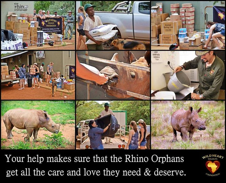 Wild Heart Wildlife Foundation Doing What We Say, Showing What We Do! to help orphan Rhinos.