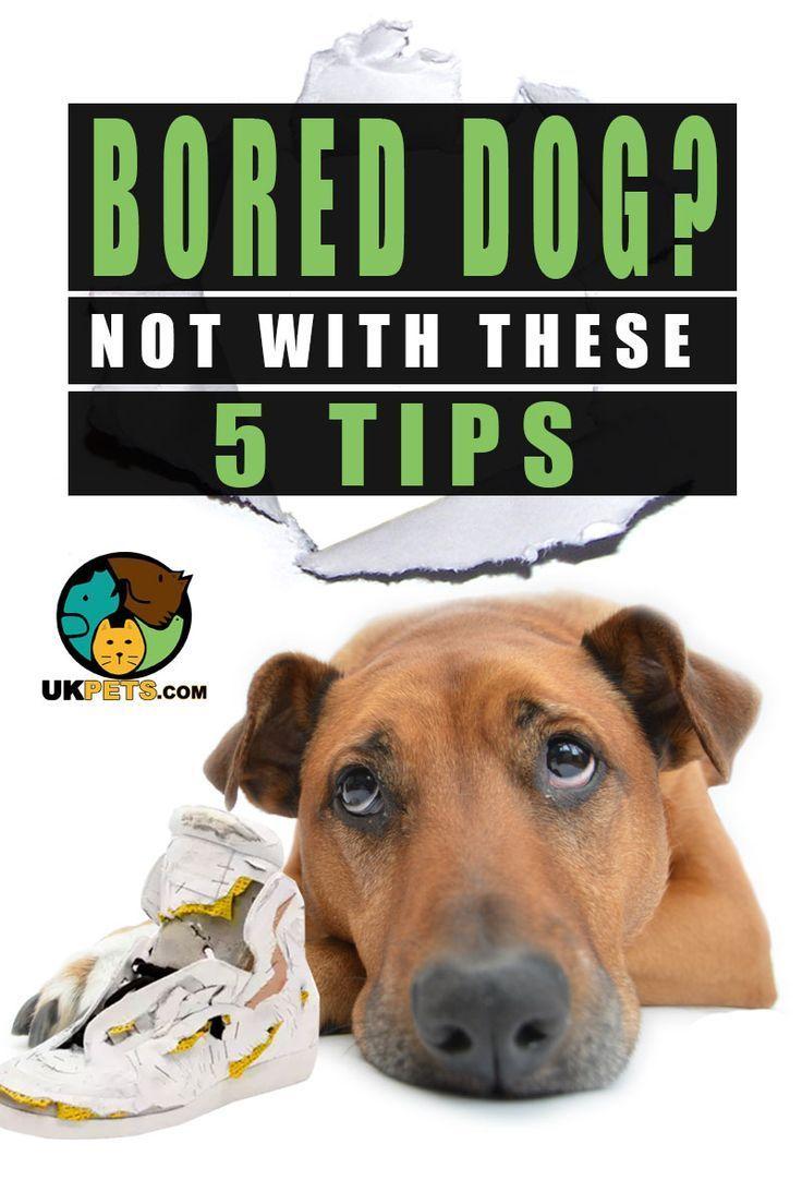 Anti Boredom Tips For Your Dog Bored Dog Dog Boredom Dog Minding