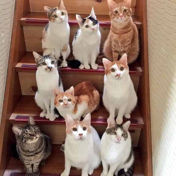 【画像】 階段でおやつあげてたら、クラスの集合写真みたいのが撮れたwww