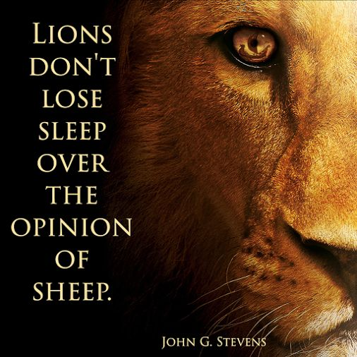 """Lions don't lose sleep over the opinion of sheep."" Latin: ""Leonum non refert quid oves censeant"""