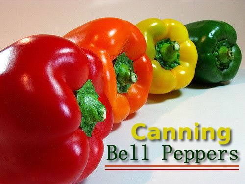 Canning Bell Peppers - pressure canner for canning your bell peppers, any type of peppers... #canning #homesteading