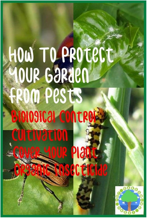 Safe And Effective Ways Of Natural Pest Control In 2020 Natural Pest Control Pests Pest Control