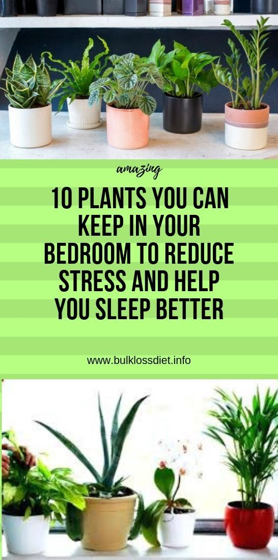 10 Plants You Can Keep In Your Bedroom to Reduce Stress ...