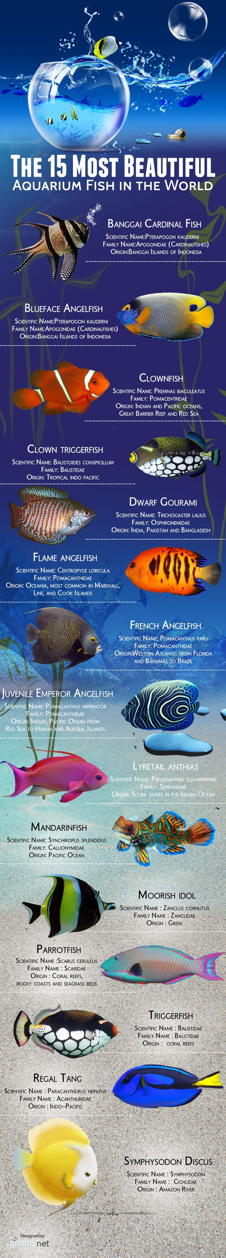 The 15 most beautiful aquarium fish in the world Infographic ~ Salt water tanks.