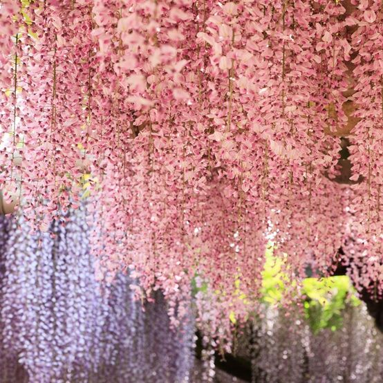 Not roses, but would compliment them with this wisteria beauty.