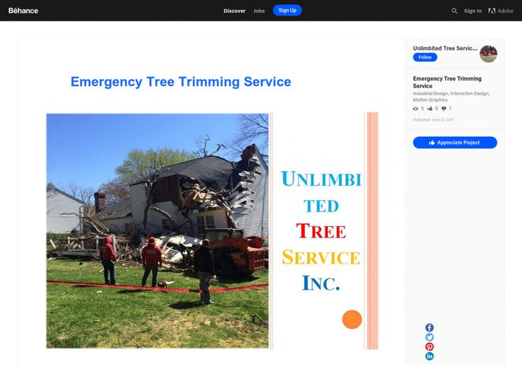 Emergency Tree Trimming Service Maryland Infographic